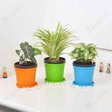 live indoor plants buy cubicle friendly table top office desk indoor plants online at