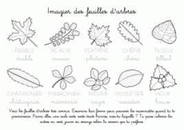 Coloriage à imprimer  Imagier des feuilles darbres