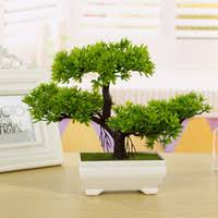 potted live tree price comparison buy cheapest potted live tree