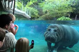 san diego zoo san diego attractions review 10best experts and