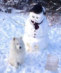 american eskimo dog yahoo american eskimo like a wolf turned into a puffball and shrunken