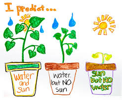 no sun plants predictions about plants crayola com