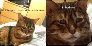 Depressed Cat Meme - my friend has the saddest looking cat i think i ve ever seen aww