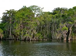 Florida vegetaion images Florida state park guide faq orlando jpg
