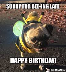 Pug Birthday Meme - pug in bee costume sorry for bee ing late happy birthday pug