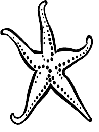16 black and white starfish tattoos