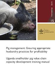 pig management ensuring appropriate husbandry practices for