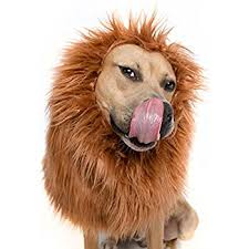 lion costume lion mane for dog lion mane dog costume by pet krewe