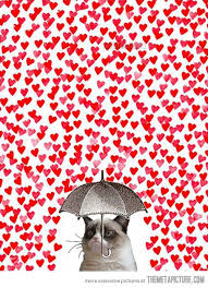 grumpy cat valentines grumpy s day the meta picture