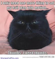Awesome Quotes About Cats Being - cats and their tough workload ahead of them angry cat captions