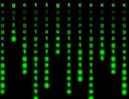life u0027s code rewritten in four letter words new scientist
