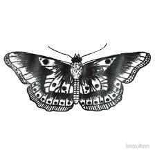 harry styles butterfly and