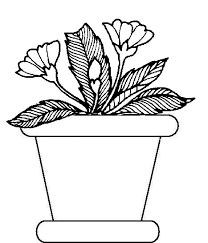 drawn pot plant coloring pencil color drawn pot