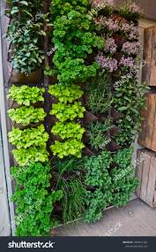 Small Urban Gardens Vertical Herb Garden Small Urban Garden Stock Photo 1029811501