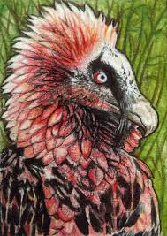 aov wallpaper bearded vulture red image gallery hcpr