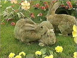 rabbits teletubbies wiki fandom powered wikia