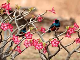Wallpaper With Birds Wallpaper With Flowers And Birds Wallpapersafari