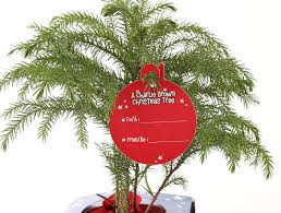 amazon com costa farms live charlie brown christmas tree