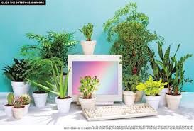 Best Plant For Office Desk Best Desk Plants 12 For The Office Bloomberg