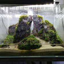 Aquascape Malaysia Eleocharis Instagram Hashtags Online Web Viewer