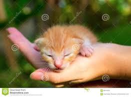 baby cat kitty stock photo image 45738334