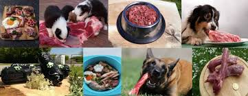 the best food for puppies is fresh food dogs first