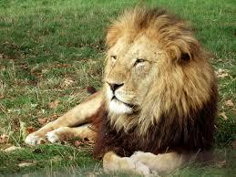 هل تعلم ان الحيوانات تصوم مثل البشر !!