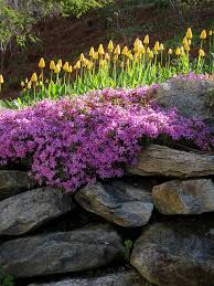 spring wall garden walled garden dry stack stone and stacked