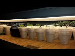 growing herbs indoors under lights growing your food part 2 starting seeds under lights youtube