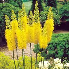 cottage garden flowers flower plants cottage garden plants
