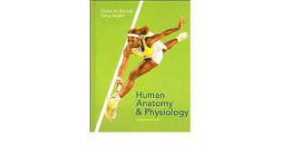 Human Anatomy And Physiology Marieb Hoehn Buy Human Anatomy And Physiology Book Online At Low Prices In