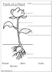 parts of a plant and flower worksheets diagram and booklets