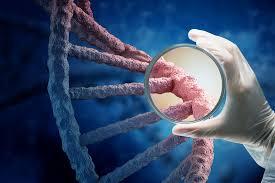 bearded collie mdr1 laboklin uk genetic diseases dogs mdr1 gene defect