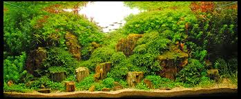 Planted Aquarium Aquascaping Aquascape Cliff Hui Fish Faqs