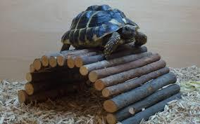 Tortoise Bedding Best Bedding For Small Animals Easibedding