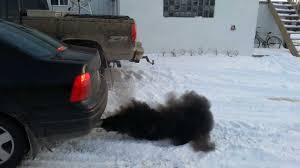 old diesel volkswagen vw jetta tdi clean diesel blows environmentally friendly black