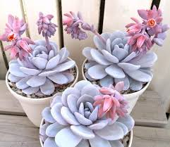 www pinterest com lovely https www pinterest com jthompson1311 cacti and succulents
