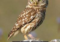 Owl Birthday Meme - list of synonyms and antonyms of the word owls wearing birthday hats