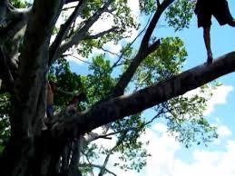 juan en rainbow tree miami florida
