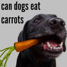 can dogs eat carrots your source for dog info