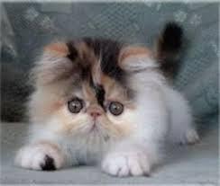 صور قطط تدحك,صور قطط,صور قطط جميلة,صور قطط حلوه Images?q=tbn:ANd9GcQiTZ2UtPKWQOOtPLnxzZaSB8NgiGqArQMo93VLTo6PvERnRegr6Q