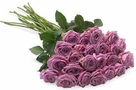 Lavender Roses Californiablooms Com Lavender Long Stemmed Roses Only 49 00