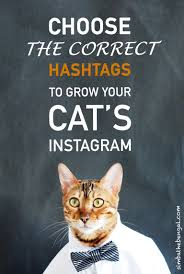 Cat Instagram How To Choose Instagram Cat Hashtags Full Guide With 347 Examples