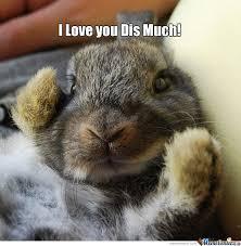 Funny Rabbit Memes - loving bunny bunny meme bunny and meme