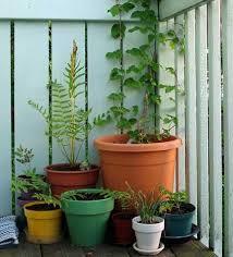 52 best balcony gardening ideas images on pinterest gardening