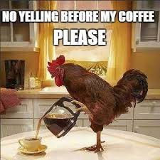 Funny Morning Memes - 31 funny good morning memes for each day of the month