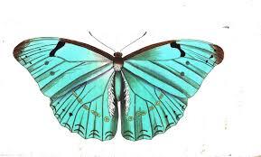 are butterflies animals 9 free hd wallpaper listtoday