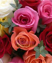 Multi Colored Roses Livrare 23 Multicolored Roses Bouquet