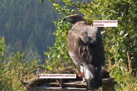 obr cky obecná zoologie