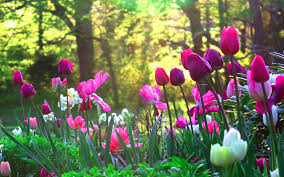 Garden by Tulips Flower Garden 1 6915713